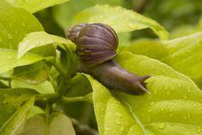 Free Snail Stock Image - 14762091