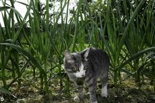 Free Cat In The Grass Stock Photo - 14762930