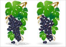 Free Grape Glossy Icon Stock Image - 14765081