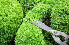 Free Gardening Royalty Free Stock Photography - 14765677