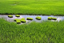 Free Paddy Field Royalty Free Stock Photography - 14765787