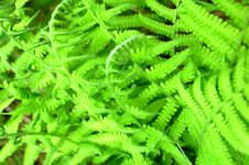 Free Fern Stock Photo - 14767220