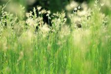 Free Morning Grass 1 Royalty Free Stock Photography - 14769597