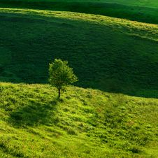 Free Green Meadow Royalty Free Stock Image - 14770186
