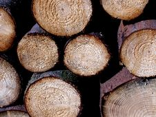Free Trunks Wood Royalty Free Stock Photo - 14773425