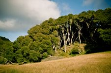 Free Wooded Hill Stock Photo - 14774000