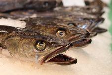 Free Fish Heads Stock Image - 14774331