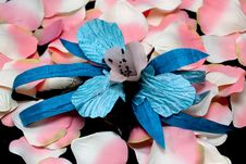 Free A Blue Orchid And Pink Rose Petals Stock Photo - 14774630