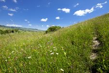 Free Field And Blue Sky Stock Photography - 14774832