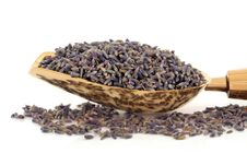 Free Lavender Herb Flowers Royalty Free Stock Photos - 14775138