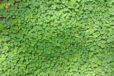 Free Green Of Vegetation Royalty Free Stock Images - 14775259