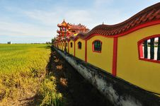 Free Paddy Field Royalty Free Stock Image - 14775766