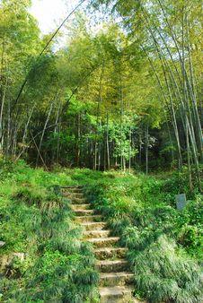 Free Bamboo Stock Image - 14775891