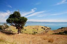 Free Coromandel Peninsula Royalty Free Stock Photography - 14776027