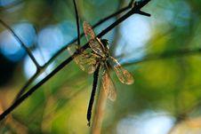 Free Dragonfly Stock Photos - 14776133