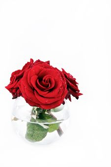 Free Red Rose In Vase Vertical Royalty Free Stock Photo - 14776405