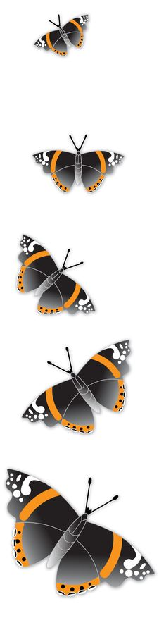 Free Admiral Butterflies Royalty Free Stock Photos - 14778218
