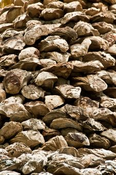 Free Old Giant Oyster Wall Royalty Free Stock Photos - 14778948
