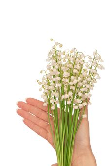 Free Lily Of The Valley Stock Photo - 14779410