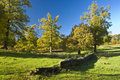 Free The English Tree Royalty Free Stock Image - 14781776