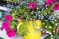Free Water Can Flowers Stock Photo - 14788470