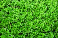 Free Water Weeds Pattern Stock Images - 14780314