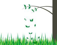 Free Tree Stock Image - 14780321