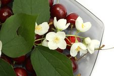 Heap Of Sweet Cherries Stock Image