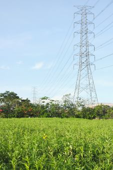 Electricity Poles In The Grass Stock Photography