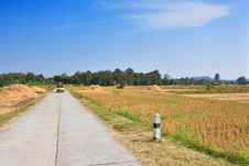 Free Road Across Rice Fields After Harvest Royalty Free Stock Photo - 14783655