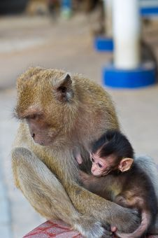 Free Little Monkey Royalty Free Stock Image - 14786266