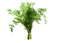 Free Bunch Of The Dill Stock Photo - 14786730
