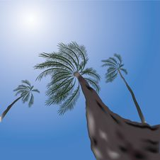 Free Tropical Scene With Palms Royalty Free Stock Image - 14786846