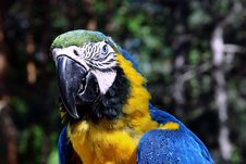 Free Parrot Stock Image - 14787481