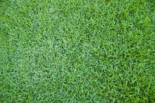 Free Grass Stock Images - 14788864