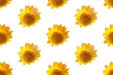 Free Yellow Strawflowers Stock Photo - 14789880