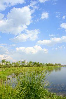 Free Everglade Park Royalty Free Stock Image - 14789996