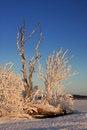 Free Winter Landscape Stock Images - 14797284
