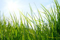 Free Green Meadow Stock Images - 14798254