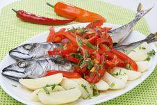 Free Atlantic Mackerel Fish Stock Photography - 14790452