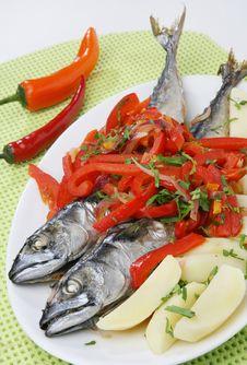 Free Atlantic Mackerel Fish Royalty Free Stock Photo - 14790465