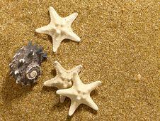 Marine Still Life Royalty Free Stock Image