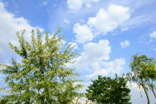 Free Trees And Clouds Stock Image - 14790921