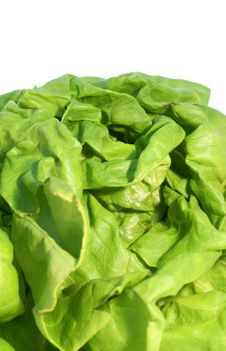 Free Lettuce Stock Images - 14791704