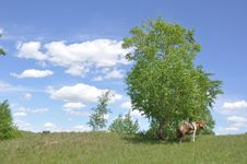 Free Clouds Over Grassland Stock Image - 14793101