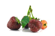 Free Bunch Of Strawberries Isolated Stock Images - 14793174