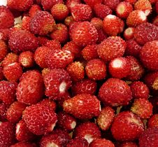 Free Wild Strawberry Background Royalty Free Stock Photography - 14793367