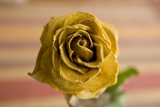 Free Beautiful Dry Rose Stock Photography - 14793742