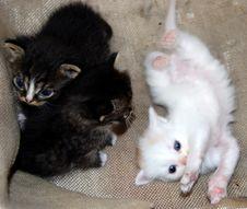 Free Kittens Stock Photos - 14793783