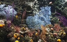 Free Coral And Reef Royalty Free Stock Photos - 14794658